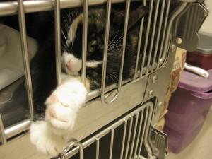 cat_shelter