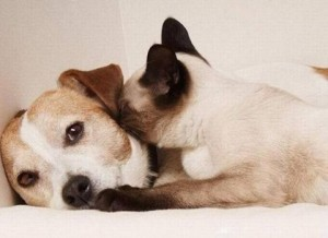 Cat whispering a secret to a dog