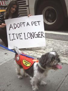 adoption_articles