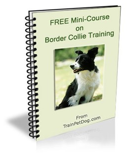 Training of Border Collies